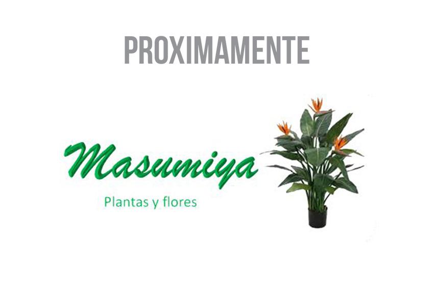 IMAGEN DESTACADA PROXIMAMENTE MASUMIYA